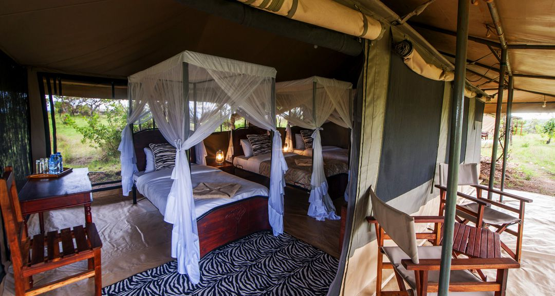 Triple Bed at the Serengeti Acacia Camp Acacia Migration Camp