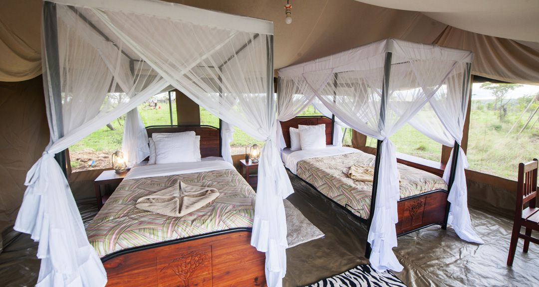 Serengeti Acacia Camp Acacia Migration Camp - Twin Bed