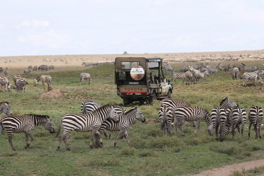 A game drive tour in the Serengeti