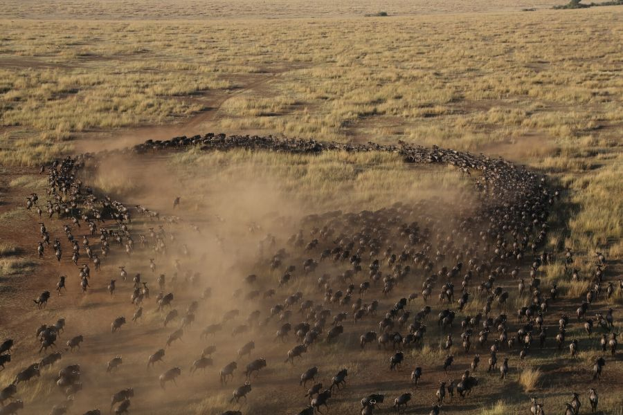 Great migration aerial serengeti