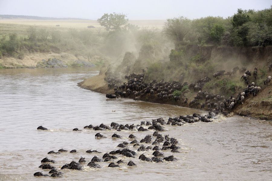 Great migration River Crossing in Serengeti. Why Visiting Serengeti Should be on your Bucket List. Serengeti Acacia Camps