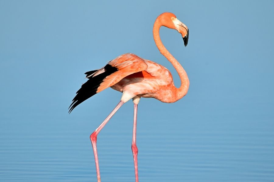 flamingos in Serengeti. The Serengeti is a True Birder's Paradise: Bird Checklist to Look Out For. Serengeti Acacia Camps