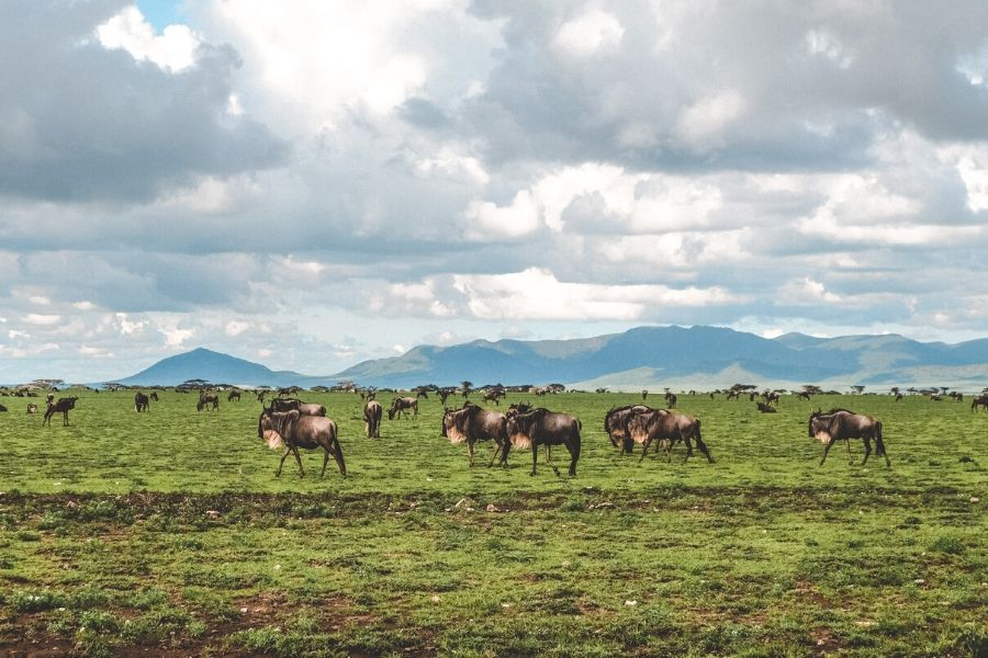 Ngorongoro Conservation Area. Nearby Parks and Attractions to the Serengeti For a More Well Rounded Tanzania Adventure Experience. Serengeti Acacia Camps